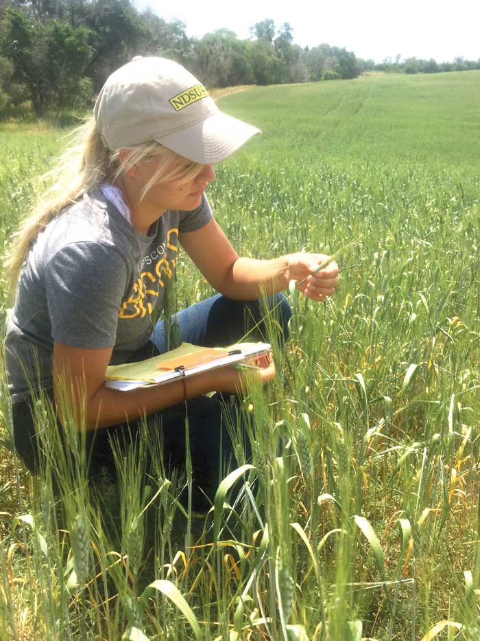 IPM Crop Scout Program At Williston Research Extension